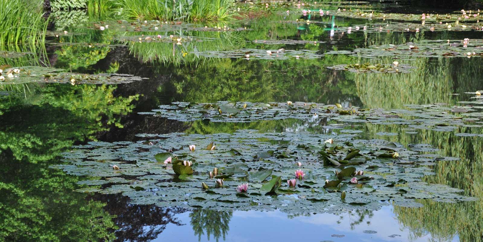 Les nympheas de Giverny par Claude Monet peintre impressionniste
